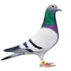Club colombophile du Vimeu